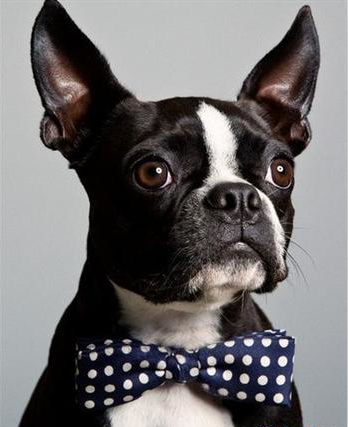 The pets' bowties-New styles from Xiuhe bowtie factory