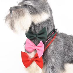 Custom various pets' bow tie